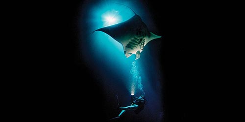 Diver with sting ray